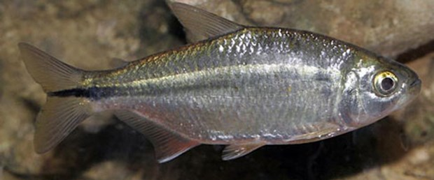 Karanlıktaki balık daha az uyuyor