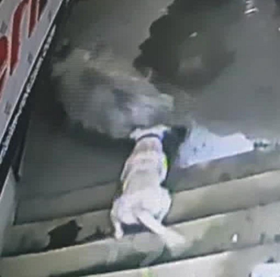 Köpeğin saldırma anı