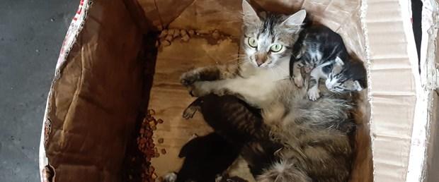 kedi-ve-yavrulari-agzi-telle-bagli-kolide-olume-terk-edildi-ek-fotograflar_7849_dhaphoto2.jpg
