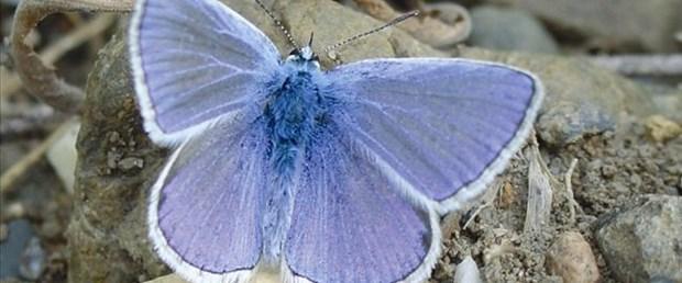 Kelebekler de değişiyor