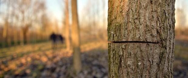 ağaç kesme.jpg