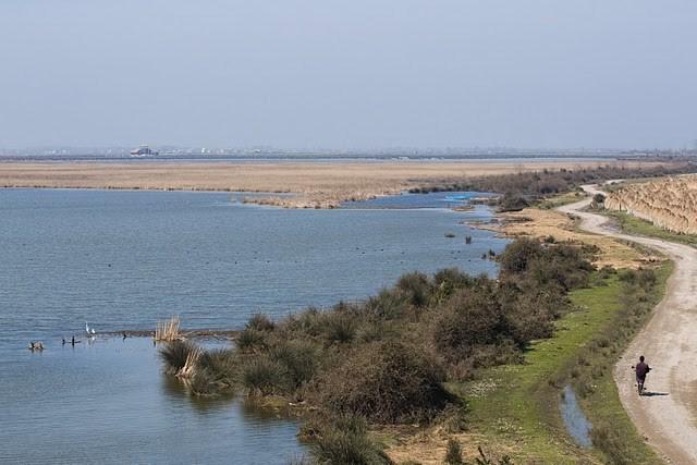 Kızılırmak Deltası önemli bir kuş halkalama merkezi