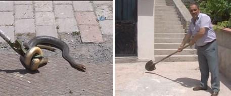 160613-kocaeli-yılan.jpg