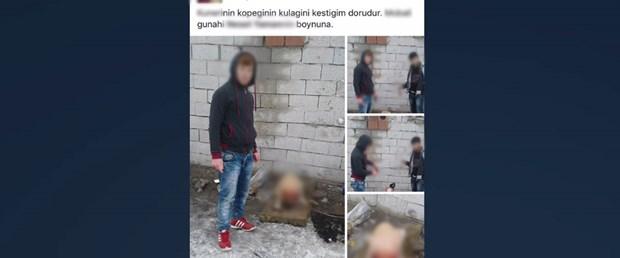 Köpeğe işkenceye 4 bin 404 lira ceza