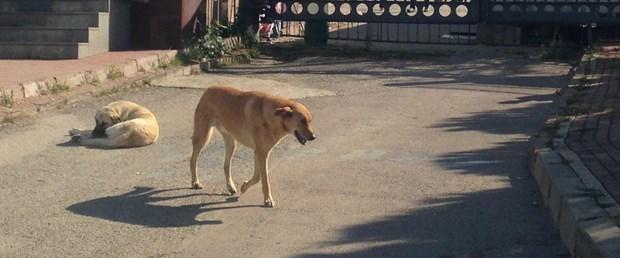 köpek cinayet.jpg