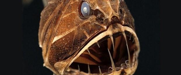 Korkutan deniz canlıları