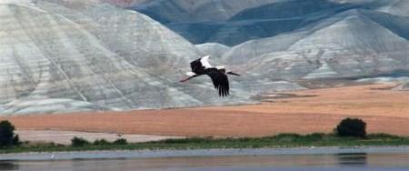 Kuş Cenneti'nde foto safari