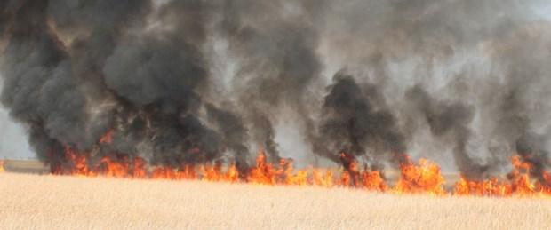 Kuş Cenneti'nde yangın