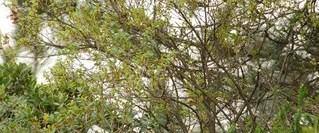 Kuş gözlemcileri buluşuyor