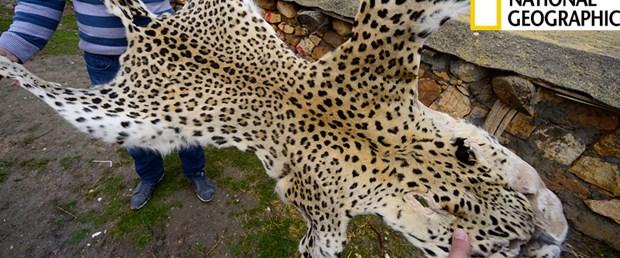 Leopar yeniden Türkiye'de