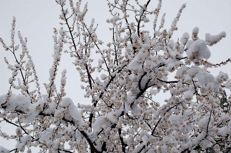 Leylekler ve çiçekler kar altında