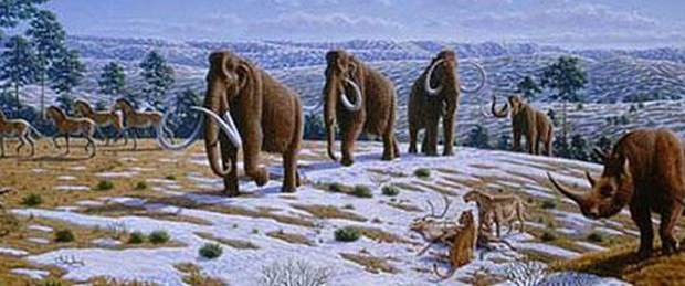 Mamutların nasıl yok olduğu kesinleşti