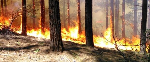 orman yangını.jpg