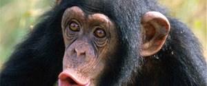 Maymun da paylaşır