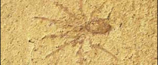Modern örümcek, atalarından daha gelişkin