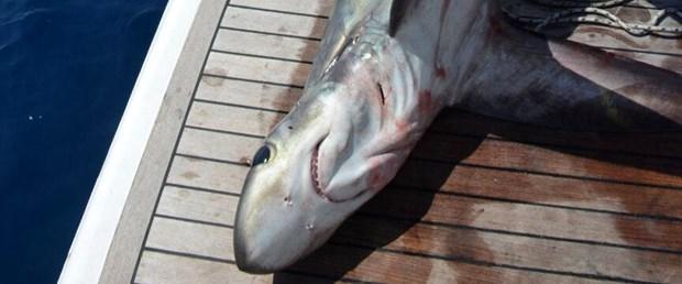 köpek balığı.jpg