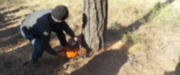 161202-kestikleri-ağacın-altında-kaldılar.jpg