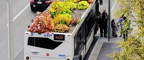 Otobüsteki bahçe