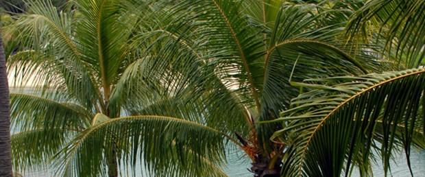 Palmiye yaprağından yalıtımlı duvar