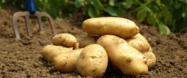 patates-canikli-stok-spekülasyon100515.jpg