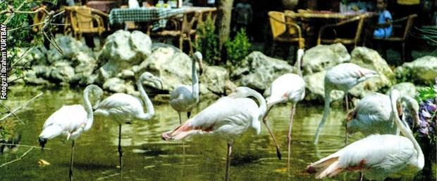 190908-flamingo.jpg