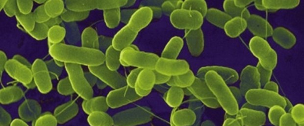 Sabit disk yerine bakteri