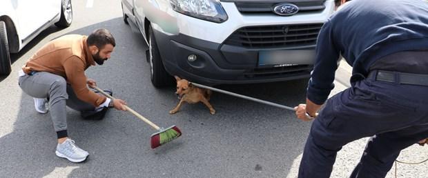 köpek tem.jpg