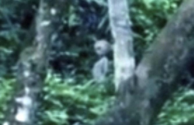 Brezilya'nın Amazon ormanlarında bulunan Manaus'ta çekilen bir videoya ait görüntü.