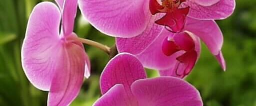 """""""Yatırlar, orkideleri kurtarıyor."""""""