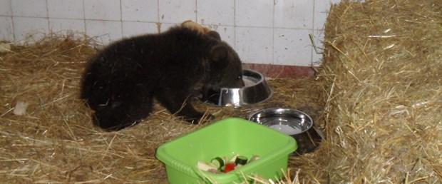 Yavru ayı kurtarma operasyonu
