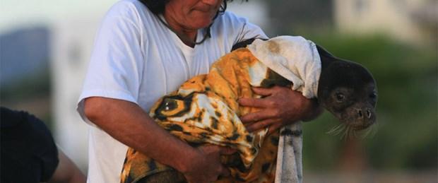 Yavru fok annesine kavuştu