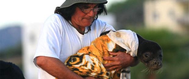 Yavru fokun annesi aranıyor