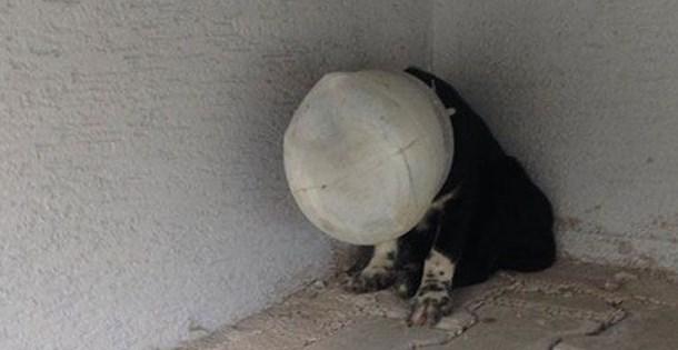 Yavru köpeği başına plastik bidon geçirip, ölüme terk ettiler