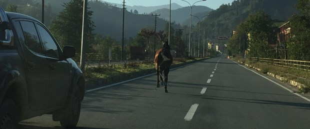 at rize trafik.jpg