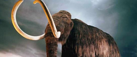 Yünlü mamutun ani sonu!