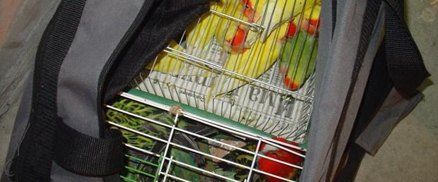 Zavallı papağanlar