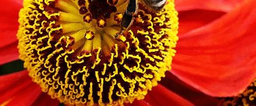 """Zenginlik kaynağı """"bal arıları"""""""