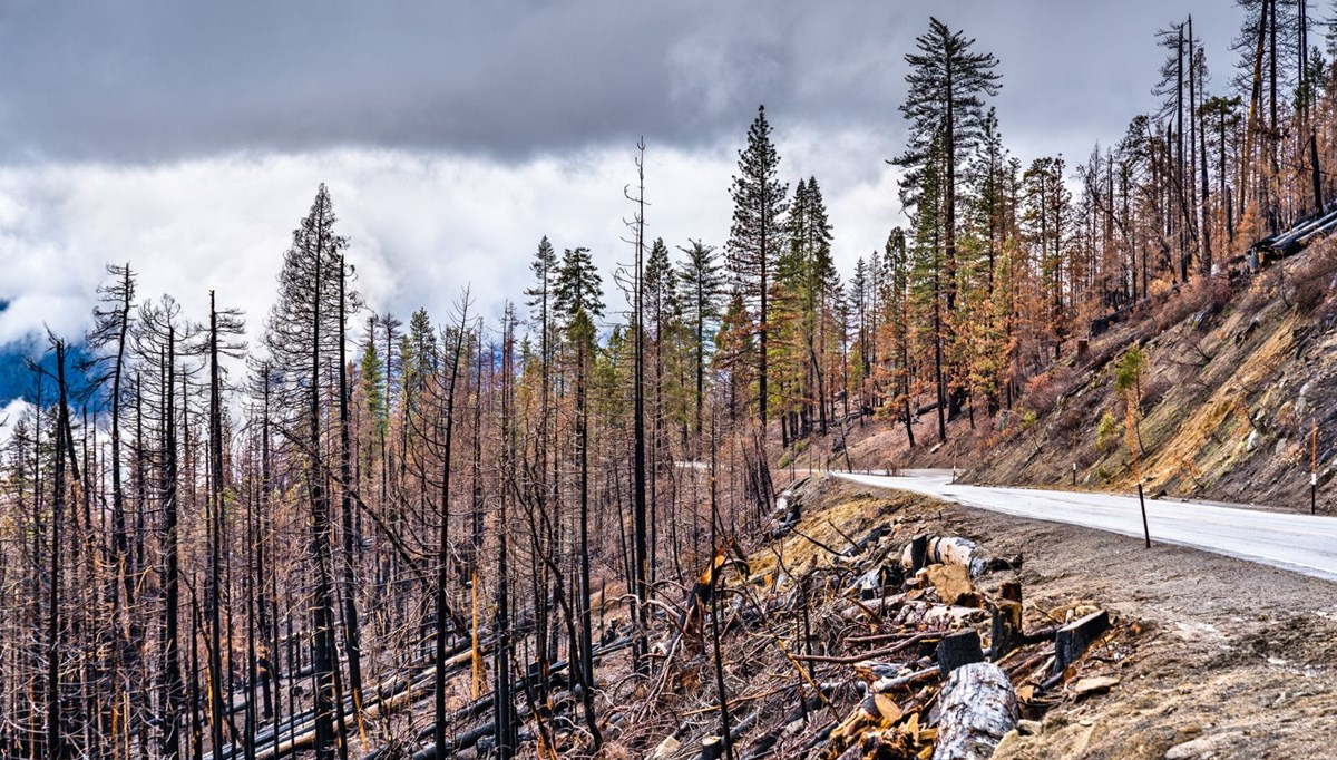 Important warning from scientists: The number of zombie fires will increase