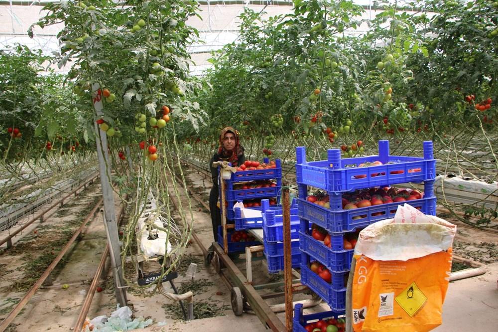 Elazığ'da topraksız tarım, kadınlara iş kapısı oldu - 12