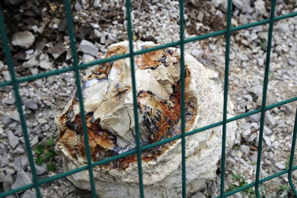 Türkiye'nin 'ilk' fosil ormanı UNESCO yolunda - 14