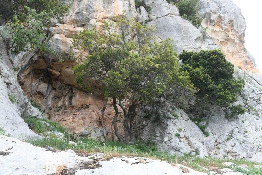 Mersin'de bir mağarada bulunan 8 bin yıllık kaya resimleri koruma altına alınıyor - 5