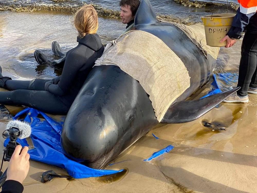 Avustralya'da sığ sularda mahsur kalan balinalardan en az 90'ı öldü - 3
