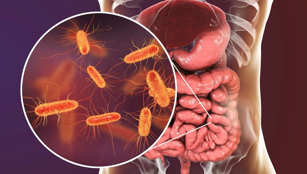 Bağırsak bakterileri Covid-19'un şiddetini etkileyebiliyor