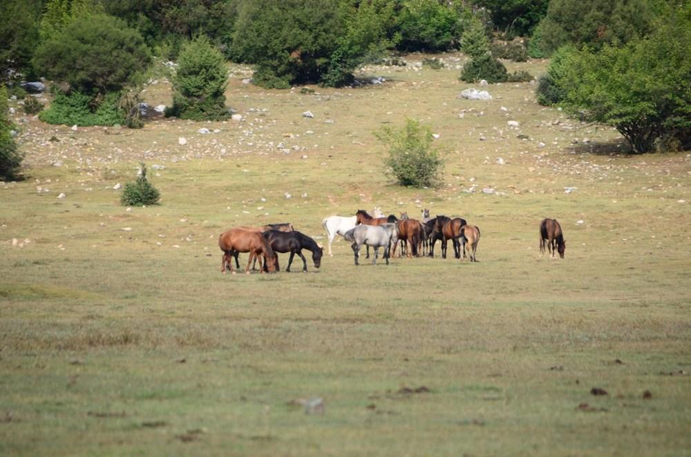 Soyları Osmanlı süvari birliğine dayanıyor! Torosların vahşi güzelliği 'Yılkı atları' - 16