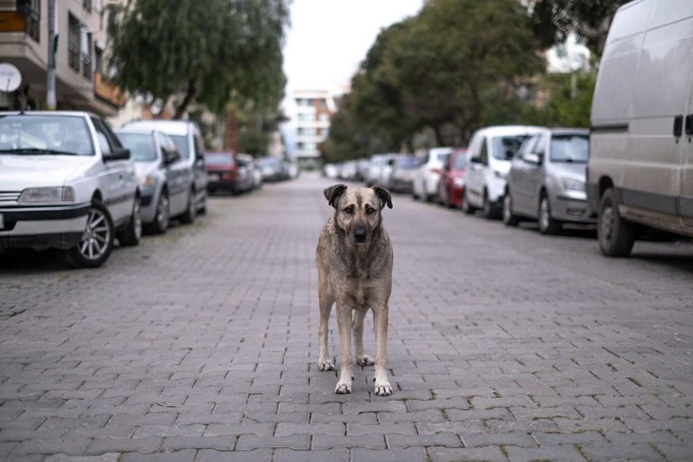 Pandemide sahiplenilen her beş köpekten biri terk edilme riskiyle karşı karşıya - 10