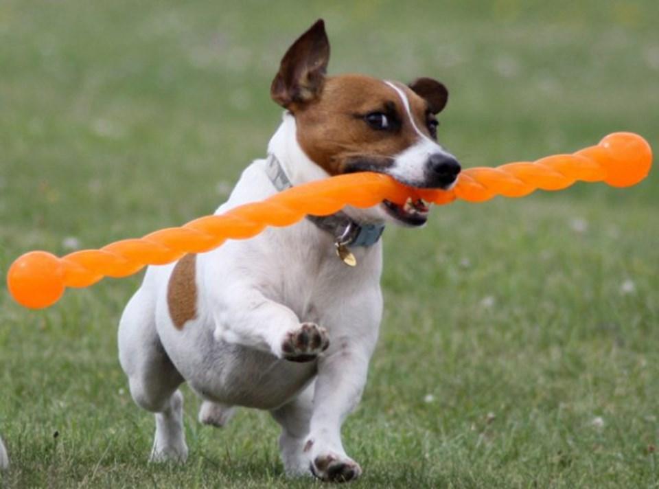 Çavuş Paul Blair esnek 'Safestix'i dört yaşındaki Jack Russell cinsi köpeği sopa kovalarken yaralandıktan sonra tasarlamış