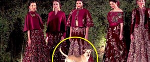 a-street-dog-enters-rohit-bal-s-fashion-show-and-steals.jpg