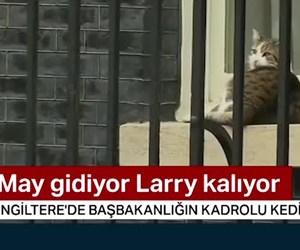 İngiltere Başbakanı Theresa May gidiyor kedisi kalıyor