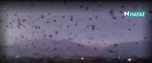 vlcsnap-2017-11-02-16h50m38s41