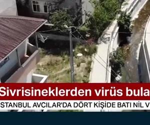 Sivrisineklerden virüs bulaştı...(Batı Nil Virüsü)